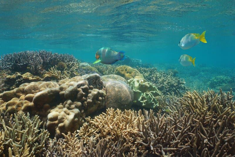 Download Oceania Caledonia Rafy Koralowa Nowa Podwodna Ryba Zdjęcie Stock - Obraz złożonej z koral, pacific: 106919028