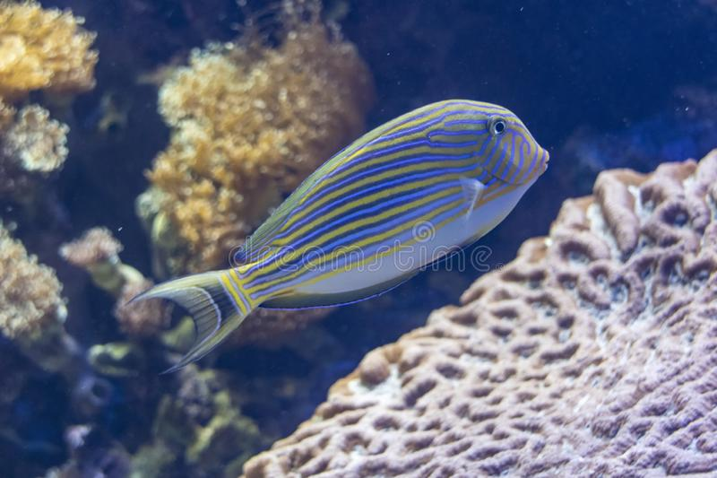 Exotic colored fish royalty free stock photo