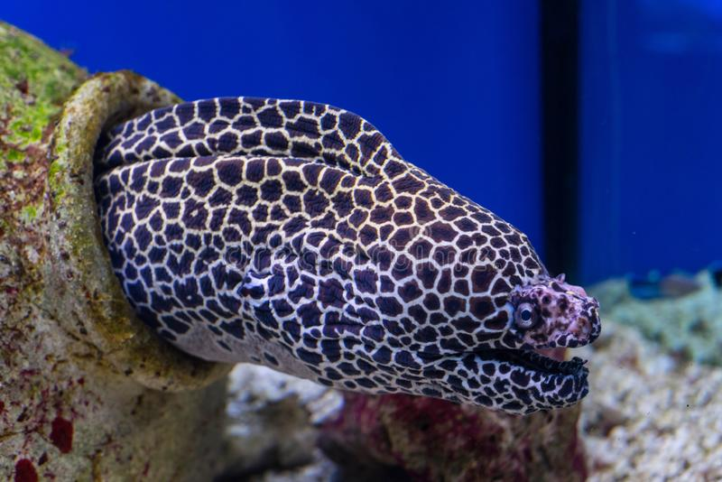 Oceanic fish in the aquarium royalty free stock photography
