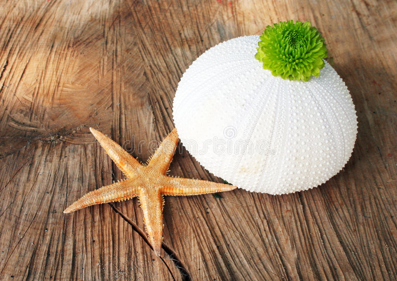 Oceanic objects royalty free stock images