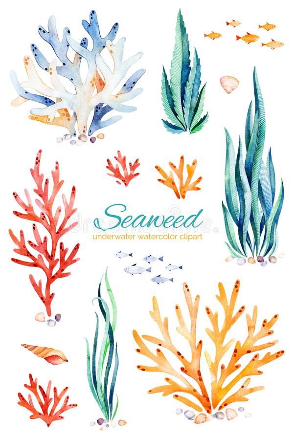 Oceanic seaweed watercolor set. Underwater hand painted multicolored coral reefs,seashells and fishes.Perfect for invitations,party decorations,printable,craft stock illustration