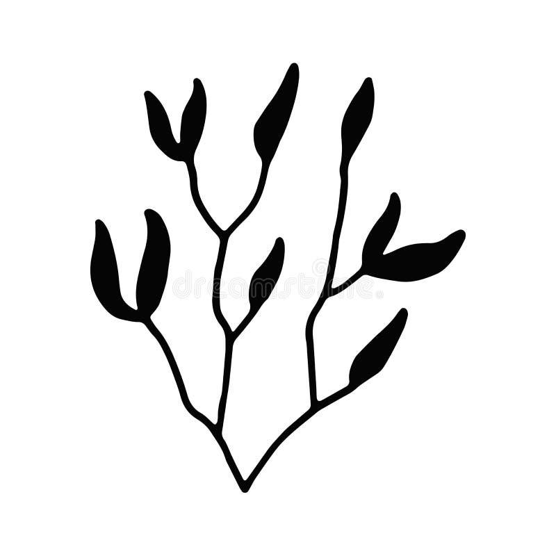 Oceaniczne podwodne gałęzatki kelp roślina kreskówka elementu pojęcie royalty ilustracja