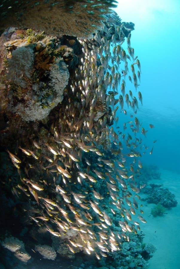 Oceano azul e sol dos peixes de vidro tropicais foto de stock