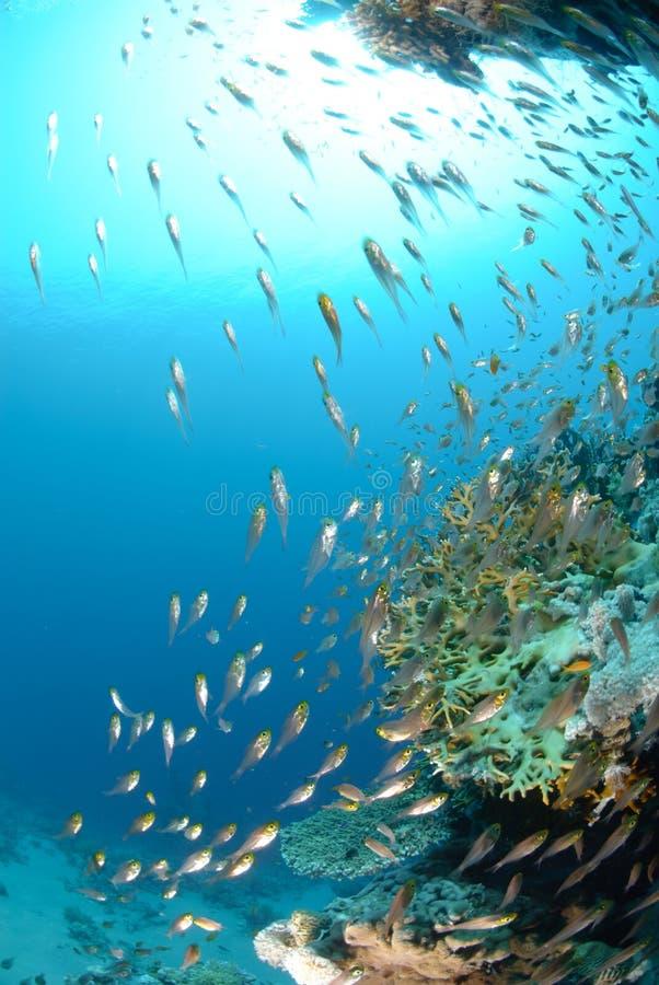 Oceano azul e sol dos peixes de vidro tropicais imagens de stock royalty free