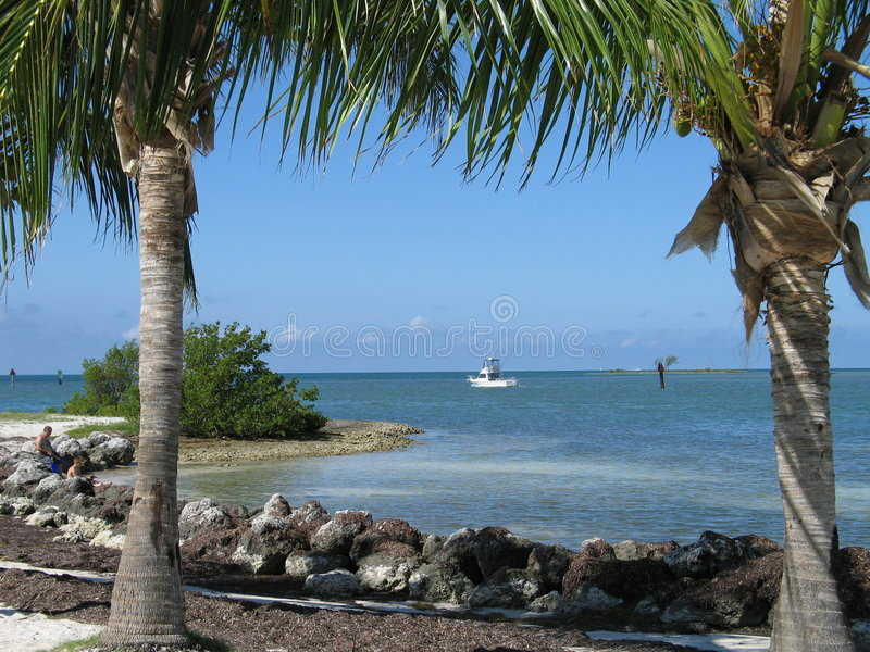 Oceano blu incorniciato da Palms immagini stock