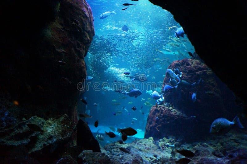 Oceano blu profondo a Tokyo fotografie stock libere da diritti