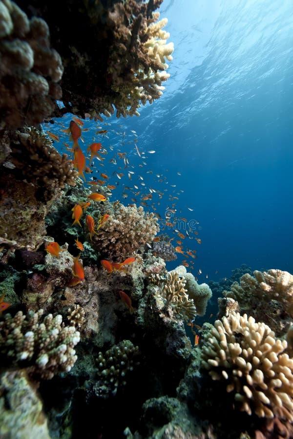 Oceano, coral e peixes imagens de stock royalty free