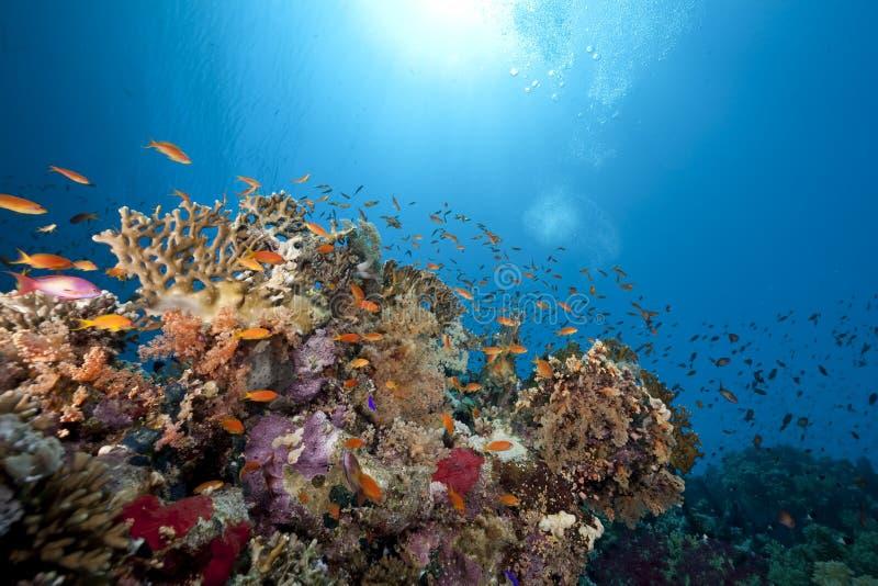 Oceano, coral e peixes fotos de stock