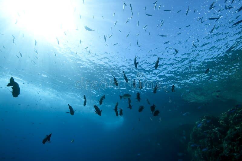 Oceano, coral e peixes imagem de stock