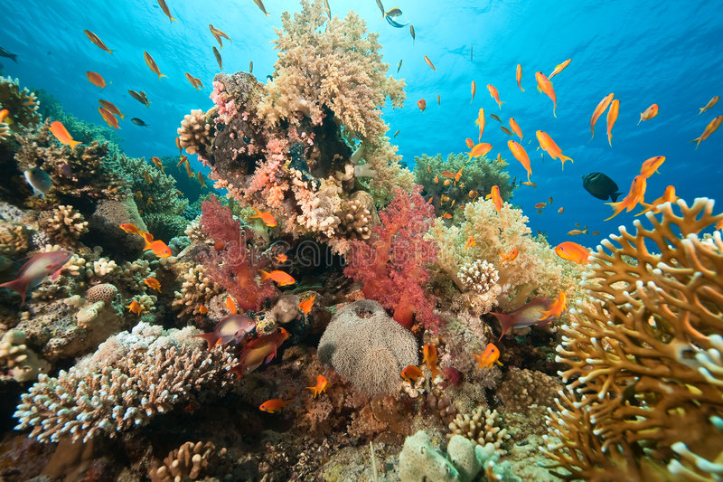 Oceano, corallo e pesci