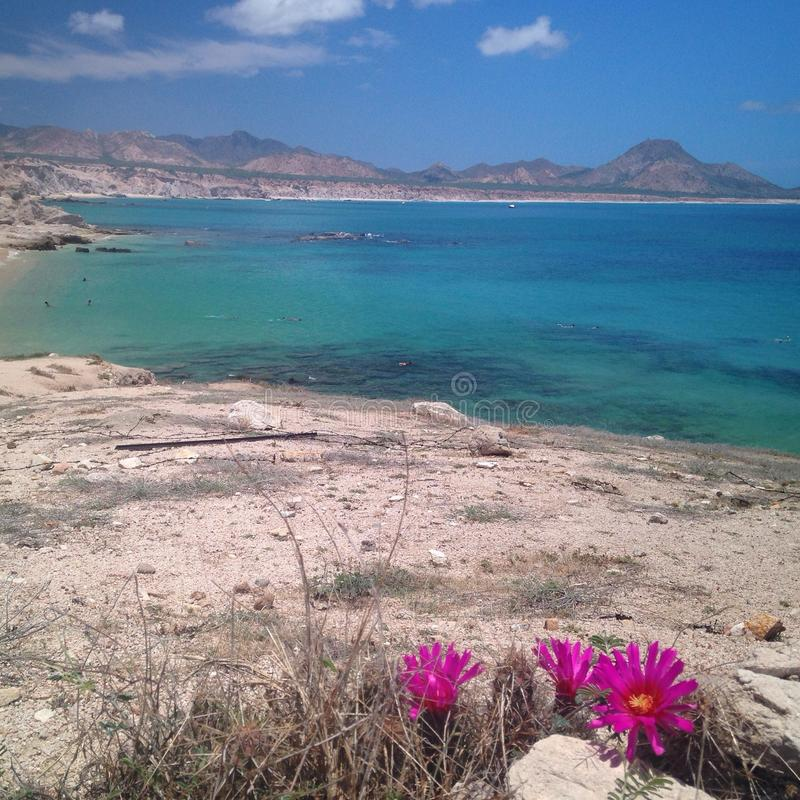 Oceano cristallino dell'acqua blu con i fiori fotografie stock