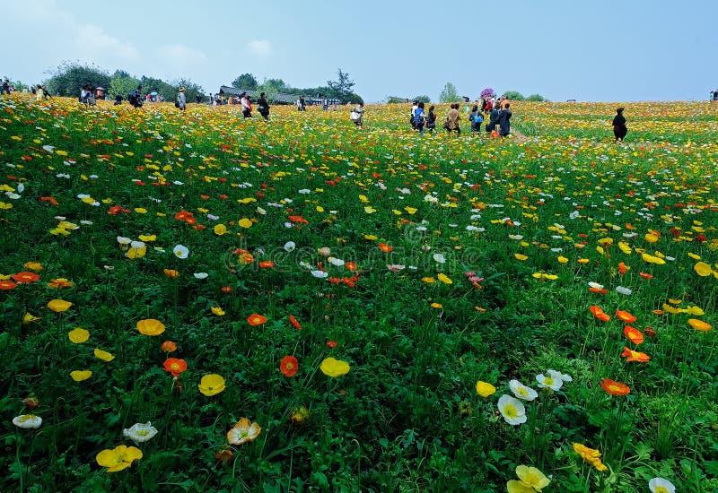 Oceano de Chengdu China-Um das flores. imagem de stock royalty free
