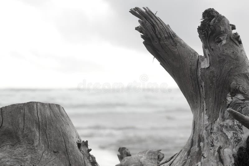 Oceano de quadro da madeira lançada à costa imagens de stock