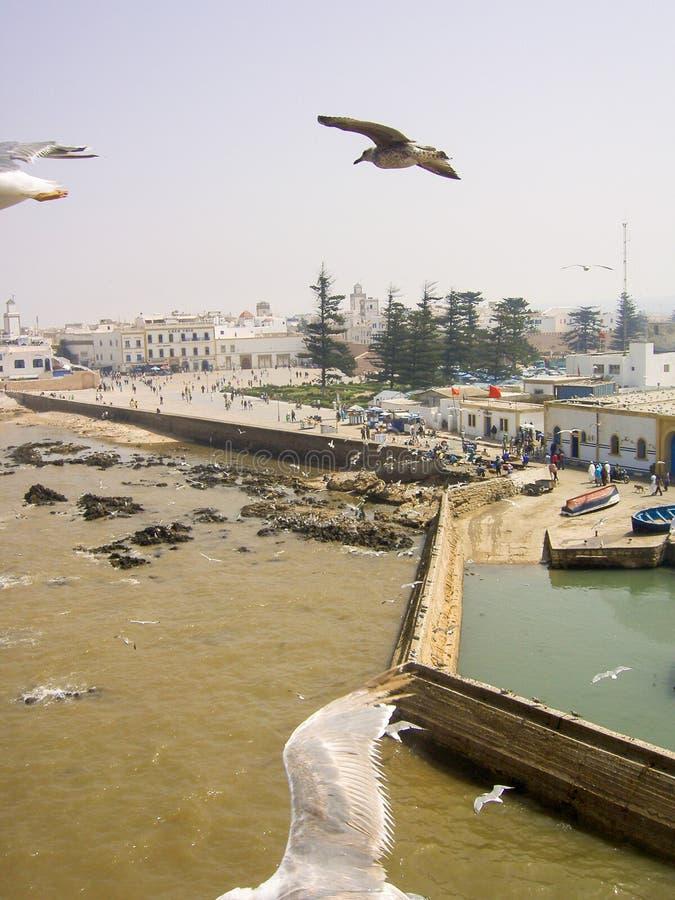 Oceano del landsccape della città di essaouira del Marocco fotografia stock