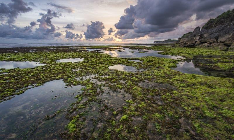 Oceano dell'alga in spiaggia di barone immagine stock
