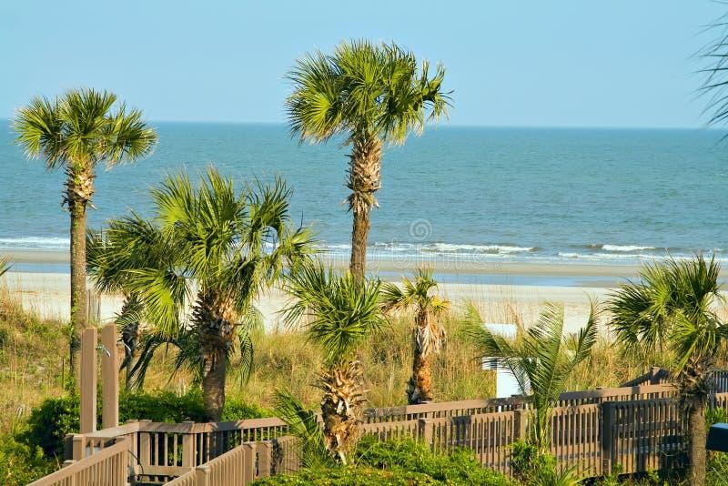 Oceano delle palme della sabbia fotografie stock libere da diritti