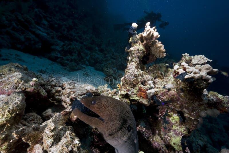 Oceano e moray gigante foto de stock royalty free