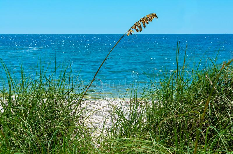 Oceano e psamma arenaria pacifici blu calmi fotografia stock libera da diritti