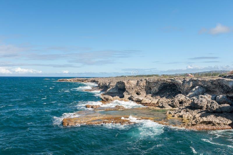 Oceano e rocce delle Barbados accanto alla caverna animale del fiore Oceano Atlantico Isola di mar dei Caraibi immagine stock libera da diritti