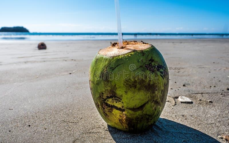 Oceano Pacifico di verde di Costa Rica Beach Vacation Pura Vida della noce di cocco fotografie stock
