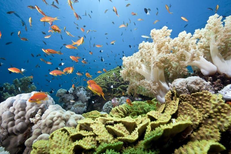 Oceano, sole e pesci fotografia stock libera da diritti