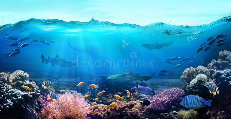 Oceano subaqu?tico com animais marinhos imagem de stock royalty free