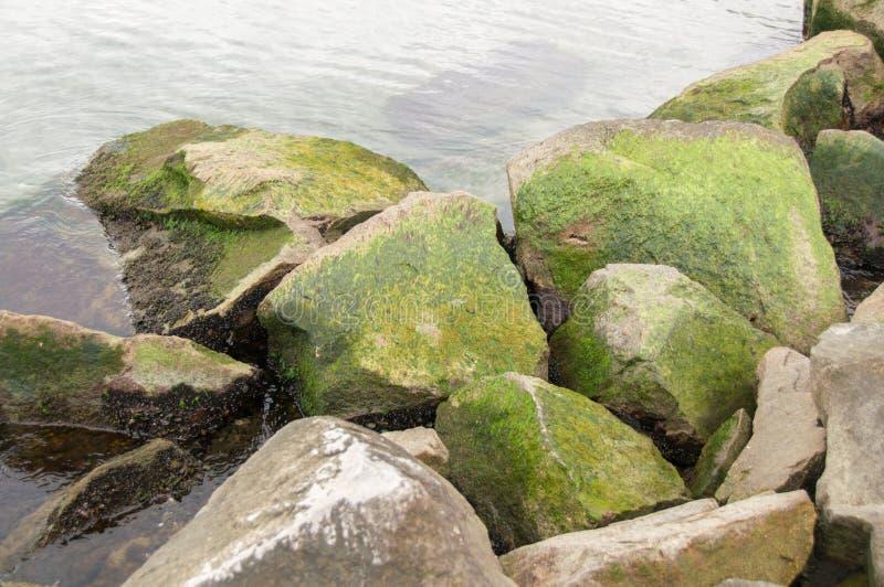 Oceano verde fresco fotografia de stock royalty free