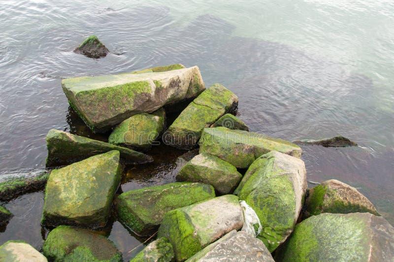 Oceano verde fresco imagens de stock