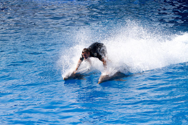 Download Oceanographic Dolphins' Show Editorial Image - Image: 21472540