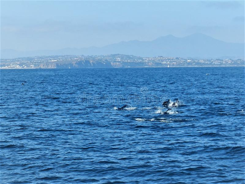 The whole ocean and beautiful dolphins royalty free stock photos