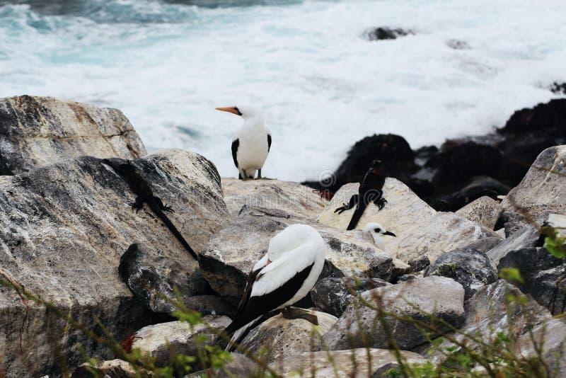 oceanside royalty-vrije stock foto's
