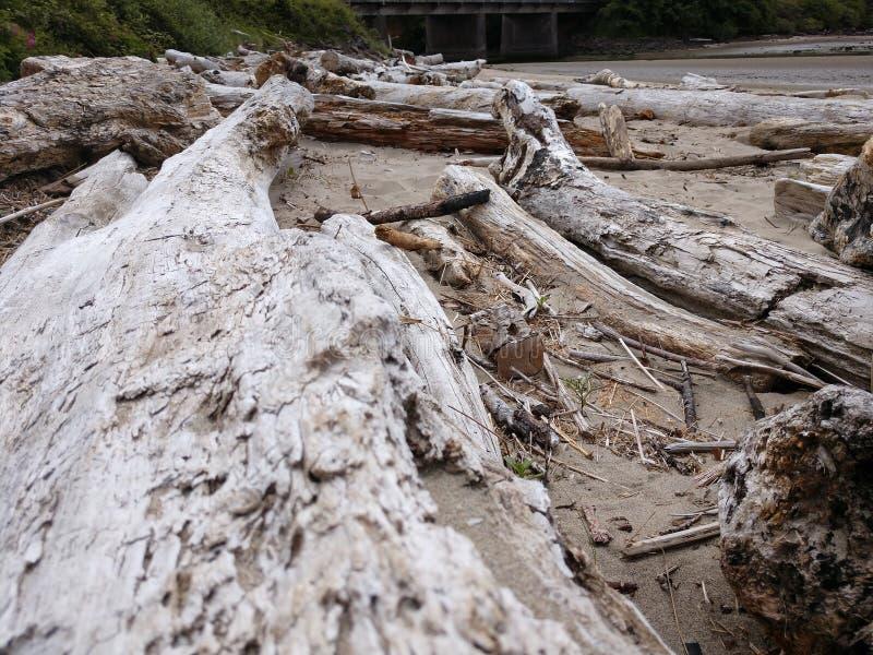 Oceanu Driftwood przy Oregon oceanside z plażą zdjęcie royalty free