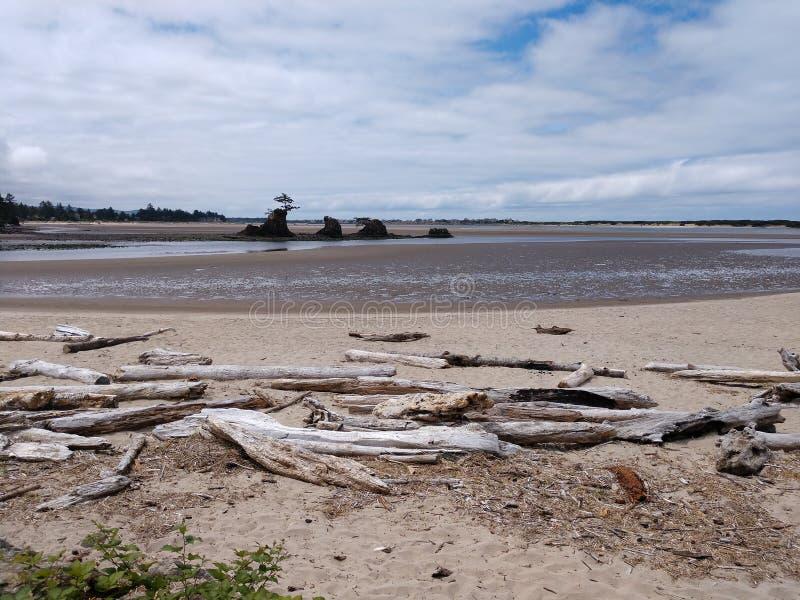 Oceanu Driftwood przy Oregon oceanside z plażą obraz royalty free