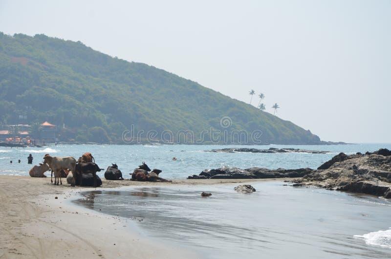 Oceanu Indyjskiego wybrze?e fotografia royalty free