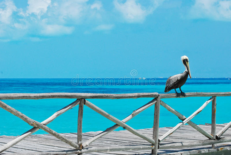oceanu pelikana poręcz obraz stock