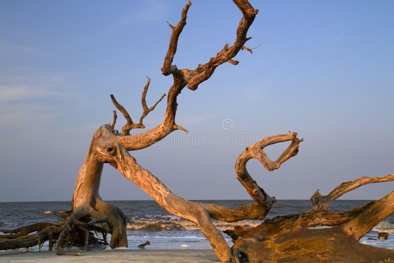 oceanu plażowy dryftowy drewno zdjęcie stock