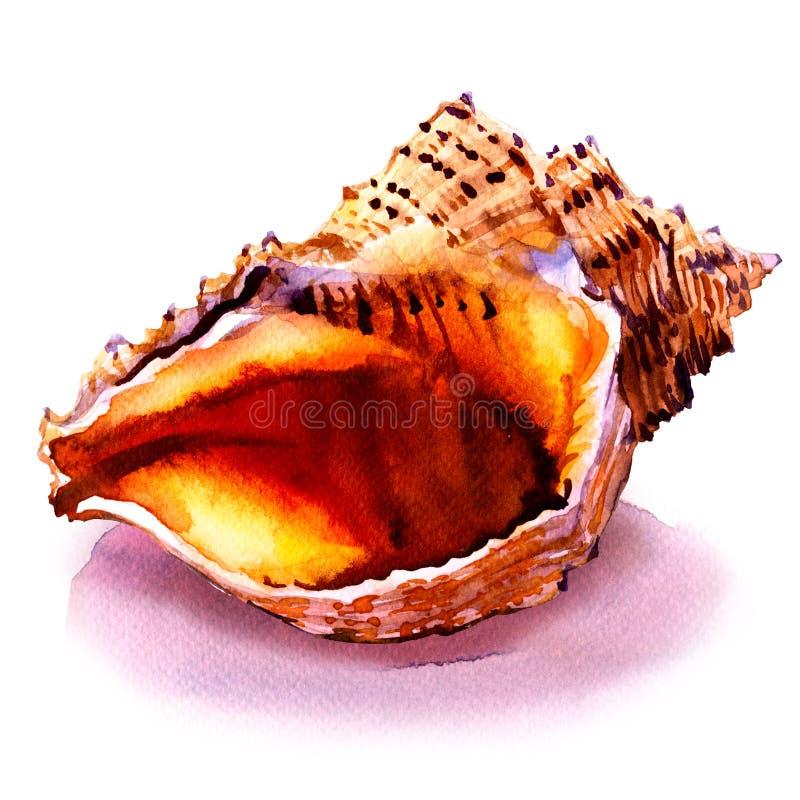 Oceanu seashell w zakończeniu na bielu royalty ilustracja