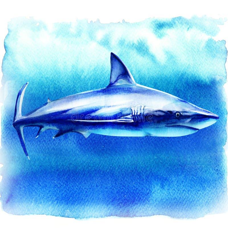 Oceanu wielki biały rekin w głębokiej błękitne wody, boczny widok, duży rybi drapieżnik, ręka rysująca akwareli ilustracja dalej ilustracja wektor