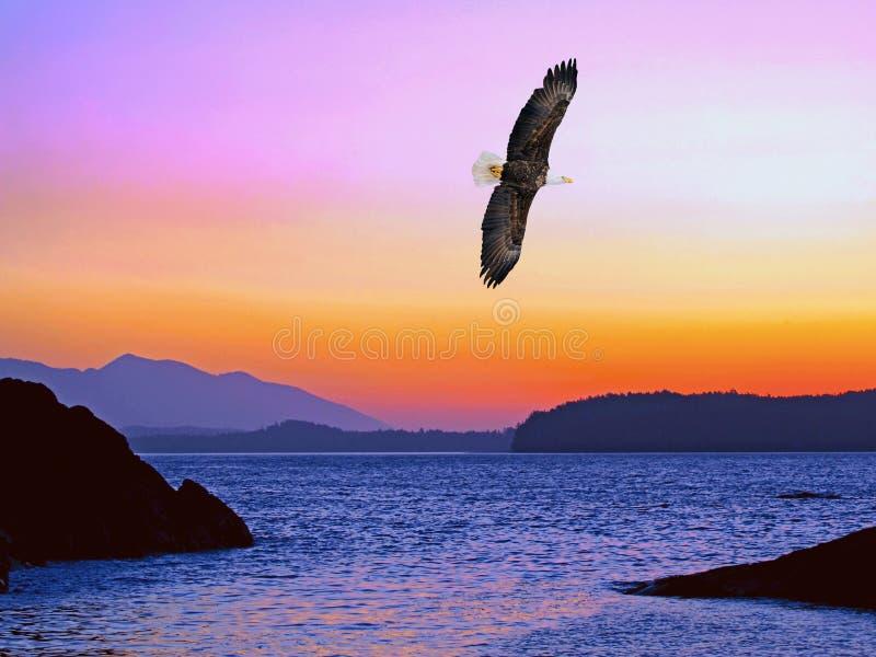 Oceanu zmierzch z Eagle lataniem w niebie zdjęcie royalty free