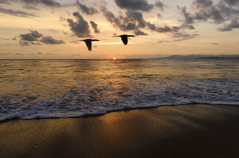 Oceanu zmierzchu ptaki zdjęcie royalty free