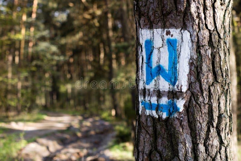 Ocechowanie turysty trasy na drzewie w lasowych drzewach z znakami obrazy stock