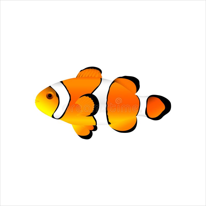 Ocellaris клоуна рыб моря иллюстрация вектора
