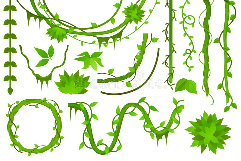 ocet liana Set wektor royalty ilustracja