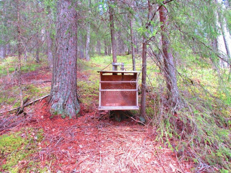 Och gammal bokhylla I att finna i skogen arkivbild