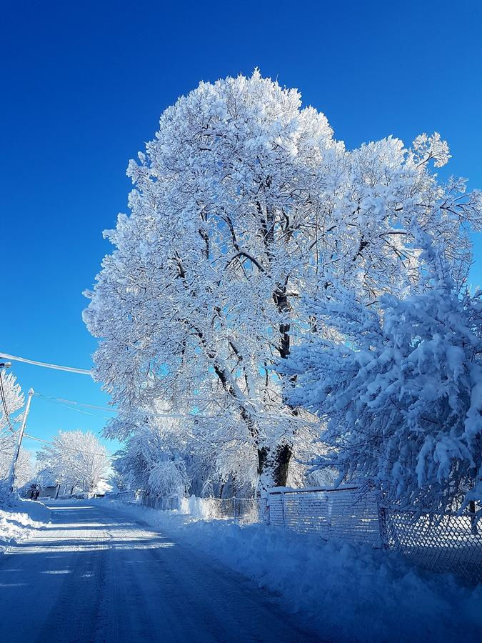 Is och träd arkivbilder