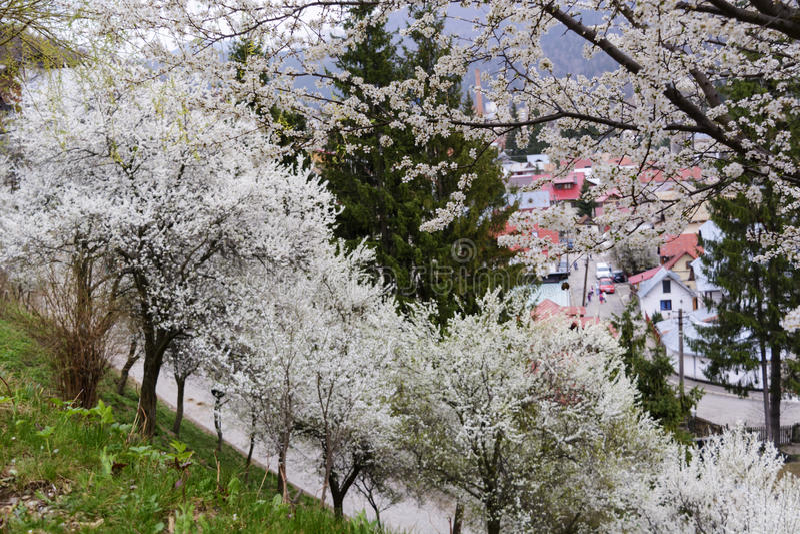 Ochard het bloeien stock fotografie
