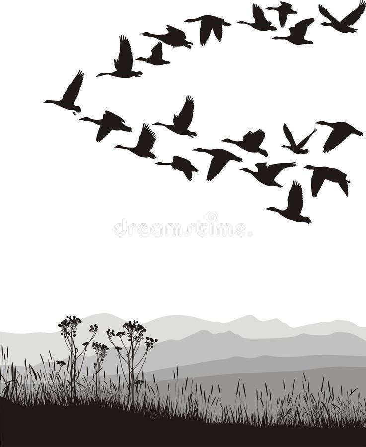 Oche di migrazione nella primavera e nell'autunno royalty illustrazione gratis