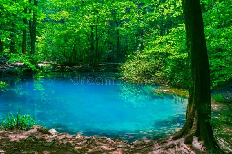 Ochiul Beiului, un petit lac vert sur la gorge de Nera en parc national de Beusnita en Roumanie image libre de droits