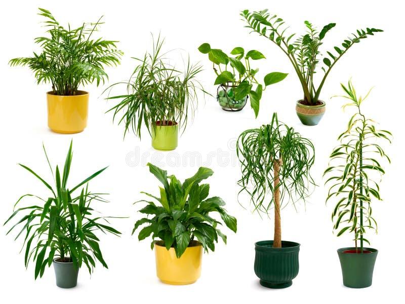 Ocho diversas plantas de interior en un conjunto fotos de archivo