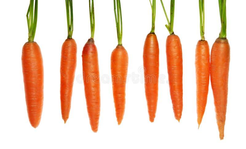 Ocho zanahorias foto de archivo